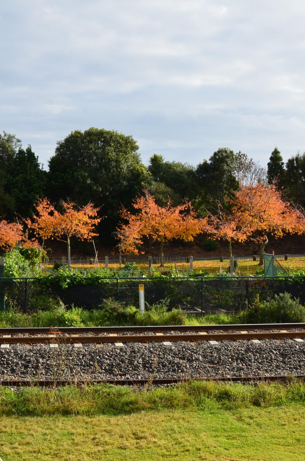 Railway Reserve Community Gardens2
