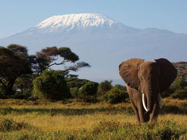 mount-kilimanjaro-tanzania_9095_600x450