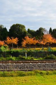 autumn 2014 (12 of 33)