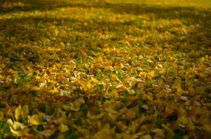 autumn 2014 (16 of 33)