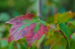 autumn 2014 (4 of 33)