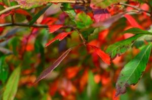 autumn 2014 (7 of 33)