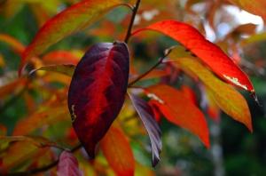 autumn 2014 (9 of 33)