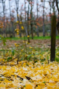autumn 2014 (1 of 1)