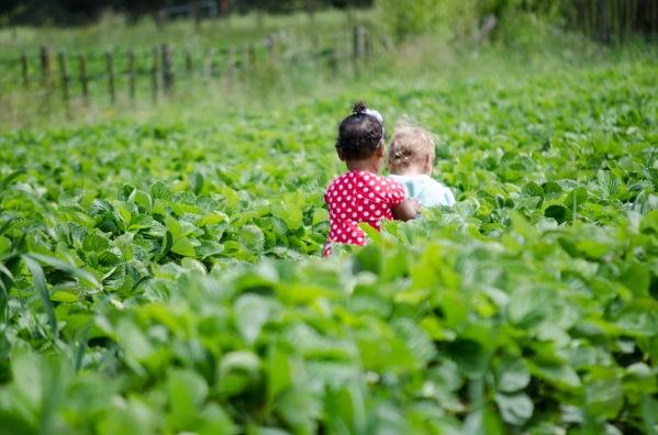 strawberry picking 2015 (13 of 23)